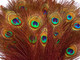 Long Orange Colorful Peacock Feathers bulk for costumes, jewelry, weddings