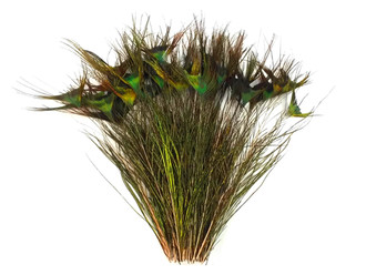 """10-12"""" Natural Green Peacock 'T' Curved Tail Wholesale Feathers (Bulk)"""