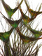 Craft tall feathers beautiful