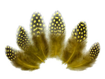 1/4 Lb - Yellow Guinea Hen Plumage Polka Dot Feathers Wholesale (Bulk)