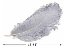 """10 Pieces - 18-24"""" Silver Gray Large Prime Grade Ostrich Wing Plume Centerpiece Feathers"""