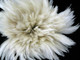 "6-7"" Natural White Strung Rooster Neck Hackle Wholesale Feathers (Bulk)"