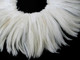 Strung Off-White Rooster Feathers natural bulk sewn together