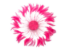 1 Piece - Hot Pink Whole Beaded Pinwheel Stripped Rooster Hackle Feather Plates