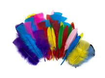Collection 77 - Mix Random Feather Sample Pack (Bulk)