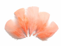 1/4 Lb - Peach Pink Turkey T-Base Plumage Wholesale Feathers (Bulk)