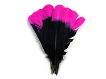 1/4 Lb - Fuchsia & Black Two Tone Turkey Round Tom Wing Secondary Quill Feathers