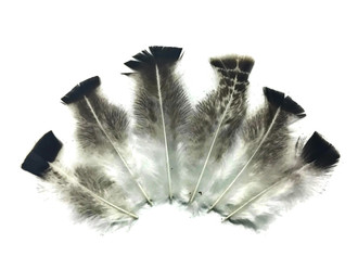 10 Pieces- Royal Palm Wild Turkey Flats Body Plumage Feathers