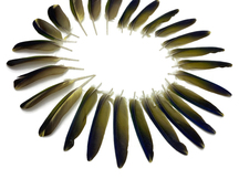 Complete Set 1 - Green & Yellow Conure Parrot Wing Feather Set -Rare-