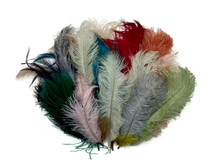 Collection 86 - Mix Random Feather Sample Pack (Bulk)
