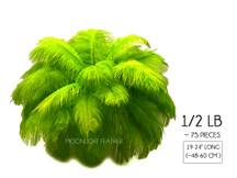 "1/2 Lb - 19-24"" Lime Green Ostrich Extra Long Drab Wholesale Feathers (Bulk)"