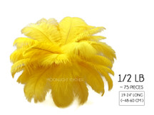"1/2 Lb - 19-24"" Yellow Ostrich Extra Long Drab Wholesale Feathers (Bulk)"