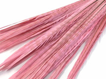 "50 Pieces - 20-22"" LIGHT PINK Long Ringneck Pheasant Tail Wholesale Feathers (bulk)"