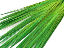 "50 Pieces - 20-22"" LIME GREEN Long Ringneck Pheasant Tail Wholesale Feathers (bulk)"