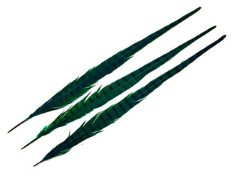 """10 Pieces - 20-22"""" PEACOCK GREEN Long Ringneck Pheasant Tail Feathers"""