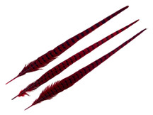 "10 Pieces - 20-22"" RED WINE Long Ringneck Pheasant Tail Feathers"
