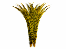 """5 Pieces - 25-30"""" Yellow Zebra Lady Amherst Pheasant Tail Super Long Feathers"""
