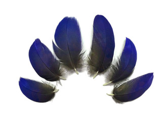 6 Pieces - Small Natural Blue Hyacinth Macaw Plumage Feather