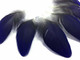 Natural Blue Black Macaw Rare Short Feathers