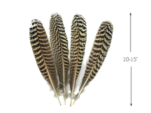 "1 Pair -  10 - 15"" and Up Natural Barred Mottled Peacock Wing Quills Feathers"