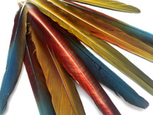 "Complete Set - 10-18"" Hybrid Camelot Golden Rust Macaw Tail Super Long Feather -Rare-"