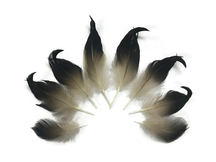 10 Pieces - Natural Mallard Drake Black Curly Tail Feathers