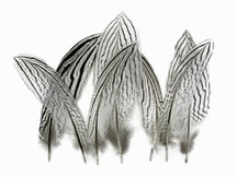 "10 Pieces - 4-6"" Natural Silver Tail Pheasant Feathers"