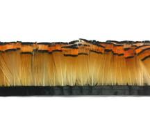 1 Yard - Natural Orange Tippet Golden Pheasant Feather Trim