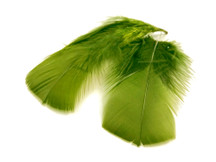 1 Pack - Olive Green Dyed Turkey T-Base triangle Body Plumage Feathers 0.50 Oz.