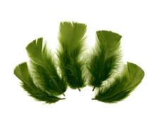 1/4 Lb - Olive Green Turkey T-Base Plumage Wholesale Feathers (Bulk)