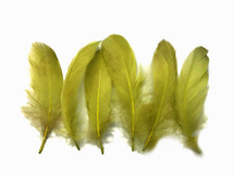 1 Pack - Olive Green  Goose Nagoire Loose Feather - 0.25 Oz