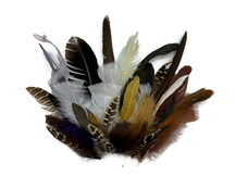 Collection 104 - Mix Random Feather Sample Pack (Bulk)