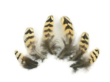 10 Pieces - Natural Brown Barred Partridge Small Plumage Feathers