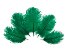 Wholesale Pack - Kelly Green Ostrich Small Confetti Feathers (Bulk)