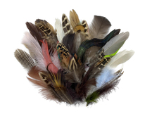 Collection 109 - Mix Random Feather Sample Pack (Bulk)
