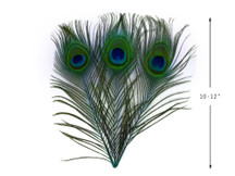 "10 Pieces - 10-12"" Turquoise Blue Dyed Over Natural Peacock Tail Eye Feathers"