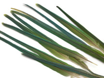 "Set of 13 - 6-12"" Natural Green Parrot Tail Feathers Set - Rare"