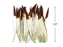 1 Pack - Brown Tipped Duck Primary Wing Pointer Feathers 0.50 Oz.