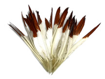 1/4 Lbs - Brown Tipped Duck Pointer Primary Wing Wholesale Feathers (Bulk)