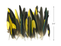 4 Pieces - Yellow, Brown & Green Mix Parakeet Wing Rare Feathers