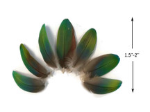 4 Pieces - Ombre Green & Blue Greenwing Macaw Plumage Feathers - Rare-