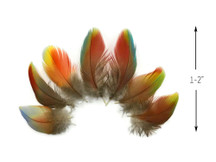 4 Pieces - Rainbow Hybrid Macaw Plumage Feathers - Rare-