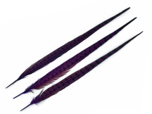 "10 Pieces - 20-22"" Purple Dye Over Natural Long Ringneck Pheasant Tail Feathers"
