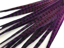 "50 Pieces - 20-22"" Purple Dyed Over Natural Long Ringneck Pheasant Tail Wholesale Feathers (Bulk)"