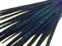 "50 Pieces - 20-22"" Blue Dyed Over Natural Long Ringneck Pheasant Tail Wholesale Feathers (Bulk)"