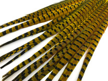 "50 Pieces - 20-22"" Yellow Dyed Over Natural Long Ringneck Pheasant Tail Wholesale Feathers (Bulk)"