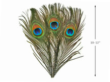 10 Pieces - Big Eye Natural Peacock Tail Eye Feathers - Amazon