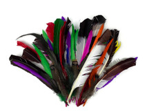 Collection 116 - Mix Random Feather Sample Pack (Bulk)