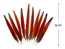 "Set of 10 - 18-24"" Scarlet Red Macaw Tail Super Long Feather -Rare-"