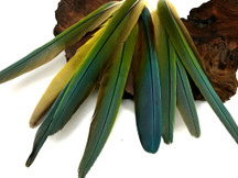 "Complete Set of 9 - 9-12"" Hybrid Greenwing Macaw Tail Super Long Feather -Rare-"